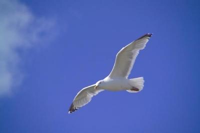 birdsoaring.jpg