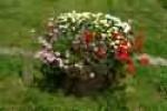 flowerskelli.jpg